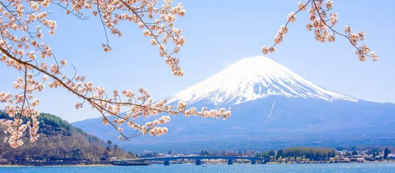 歐洲 日本+日本+日本8天旅遊東京、京都、大阪深度游