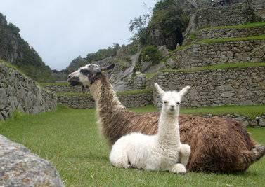 欧洲 美国+秘鲁+秘鲁+秘鲁+阿根廷15天旅游圣地亚哥、利马、库斯科、马丘比丘、布宜诺斯艾利斯深度游